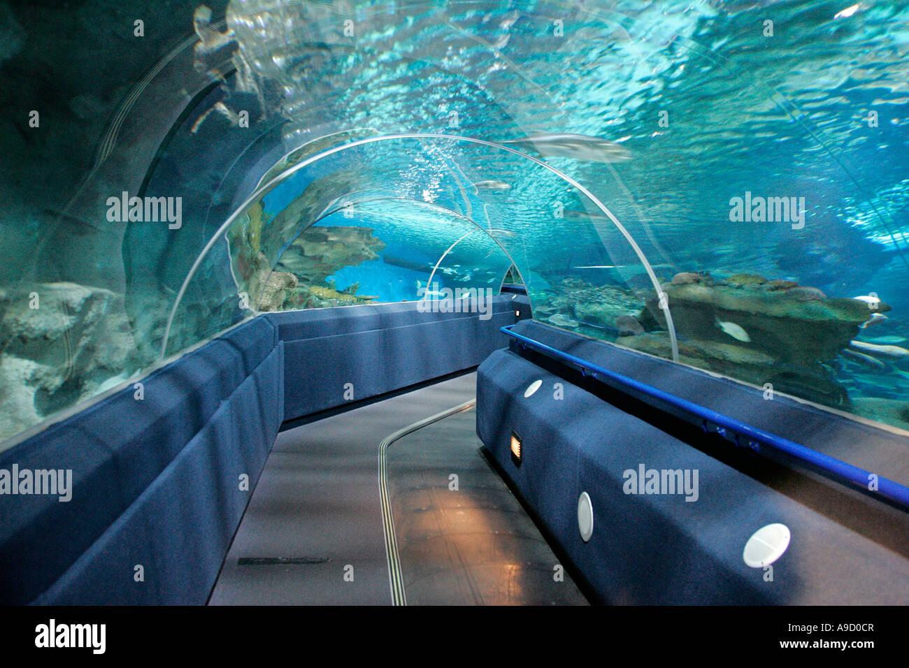 fish aquarium tank animal fishes underwater tunnel stock photo rh alamy com