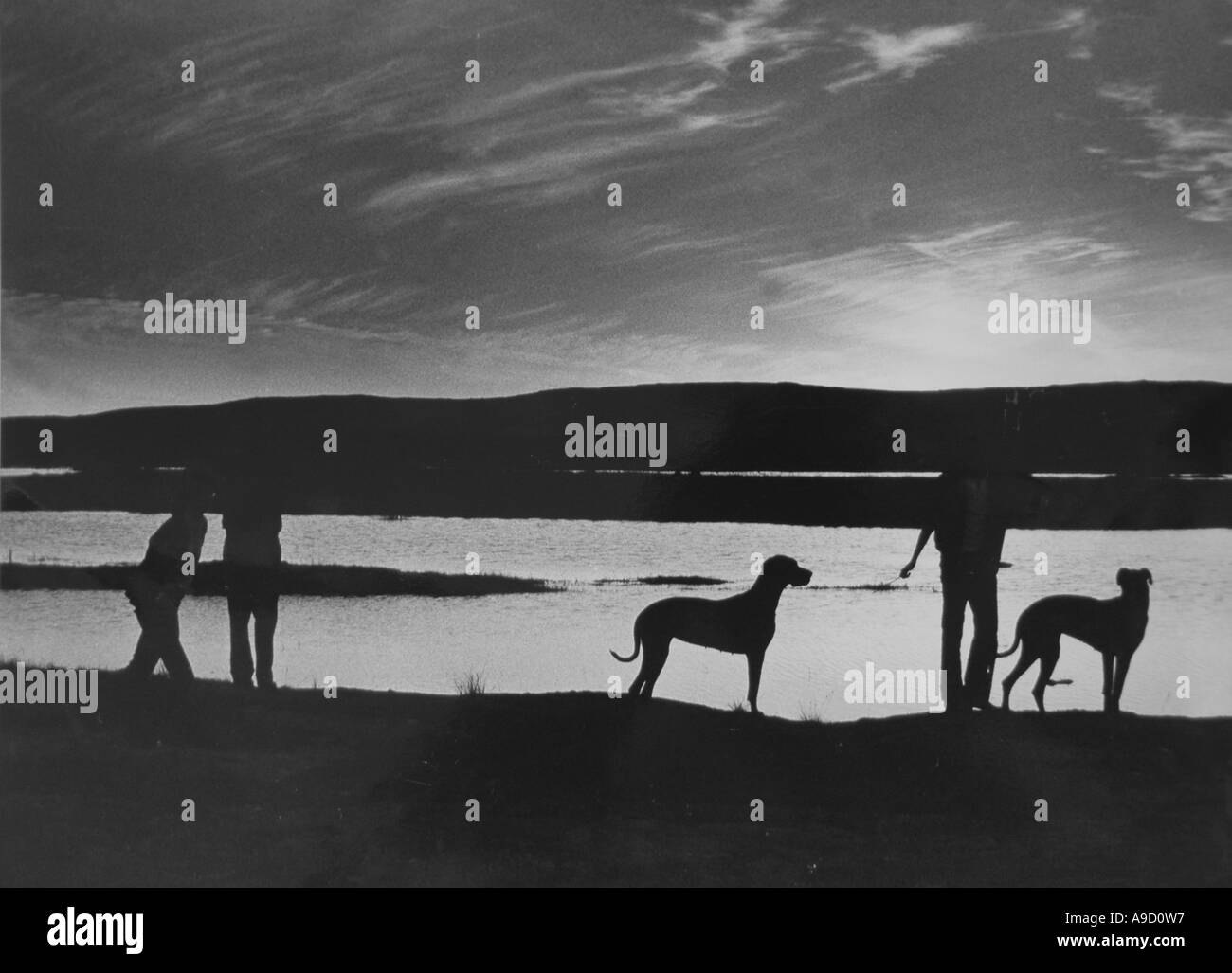 Romantic Silluette  in black and white of Dogs -great danes- with people at a lakeside  near Corofin - Co Clare- West of Ireland - Stock Image