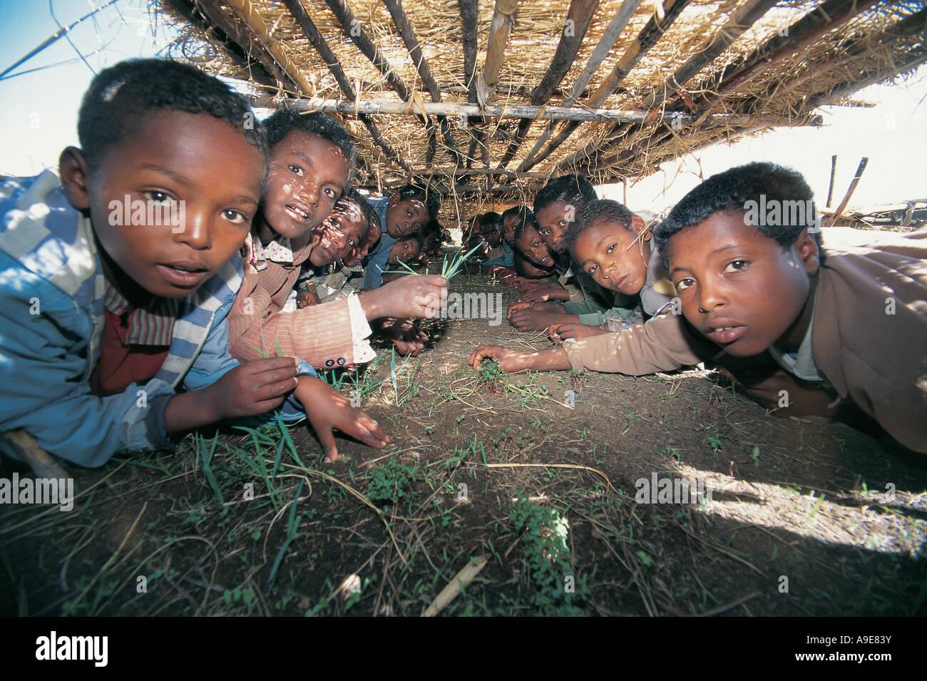 School nursery education program selling saplings for school book money Ginchi Ethiopia - Stock Image
