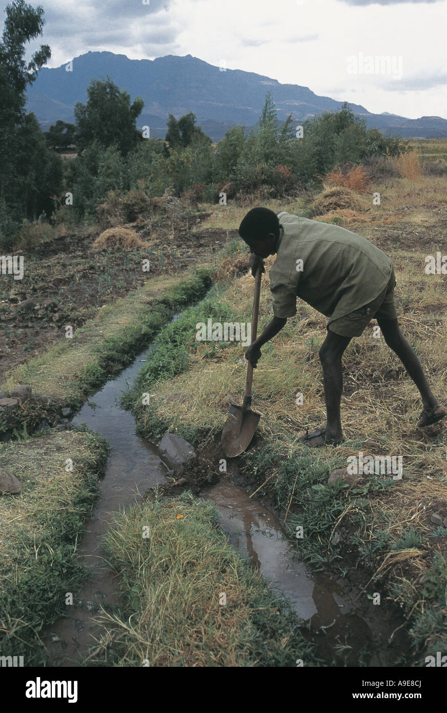Boy working hard to irrigate banana trees and crops United Nations Project Sekota Ethiopia - Stock Image