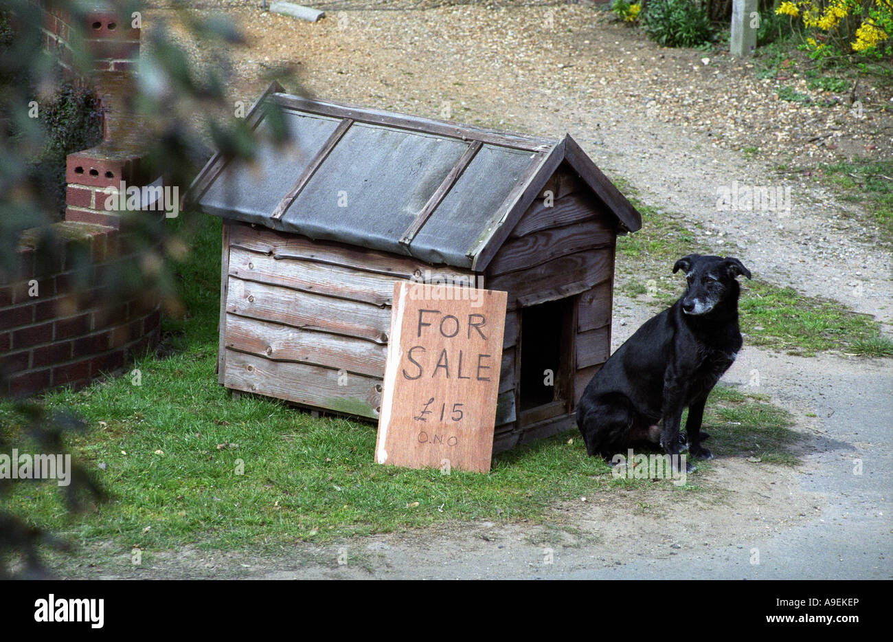 A Dog Kennel For Sale In The Village Of Bawdsey Suffolk Uk