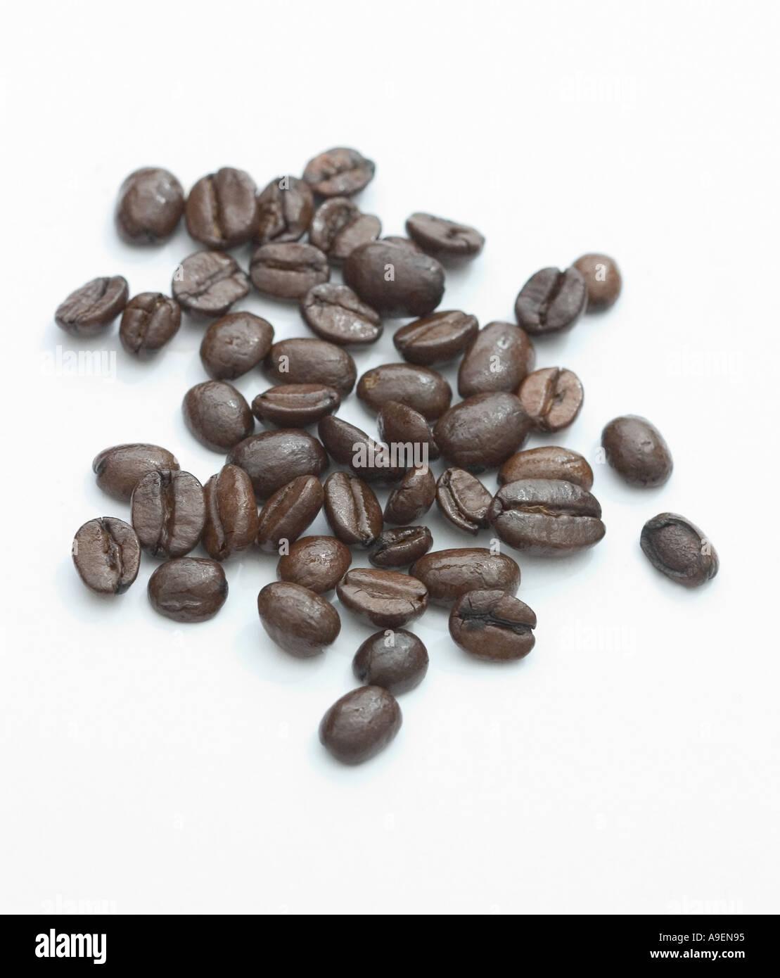 Common name Coffee beans Latin name Coffea arabica - Stock Image