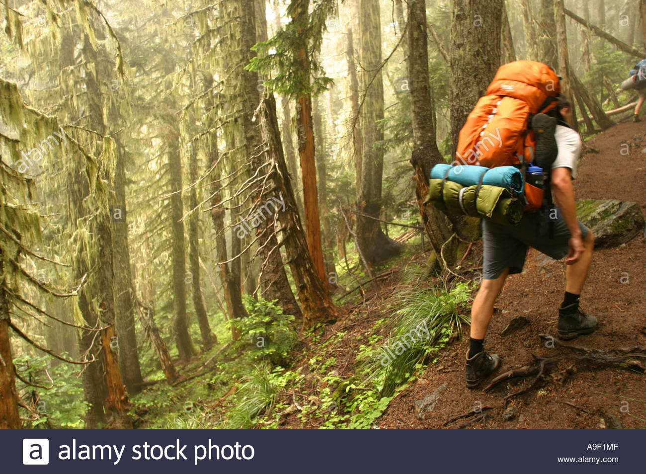 Hiking through the fog and forest Mt Rainier National Park - Stock Image