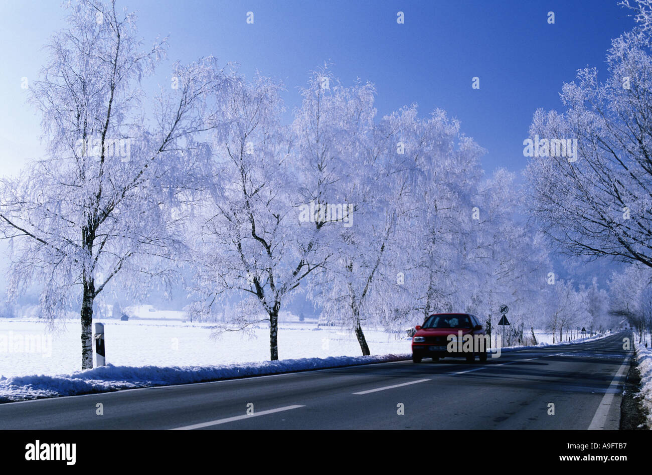 birches at a country road, covered with whitefrost, car approaching, Germany, Bavaria. Stock Photo