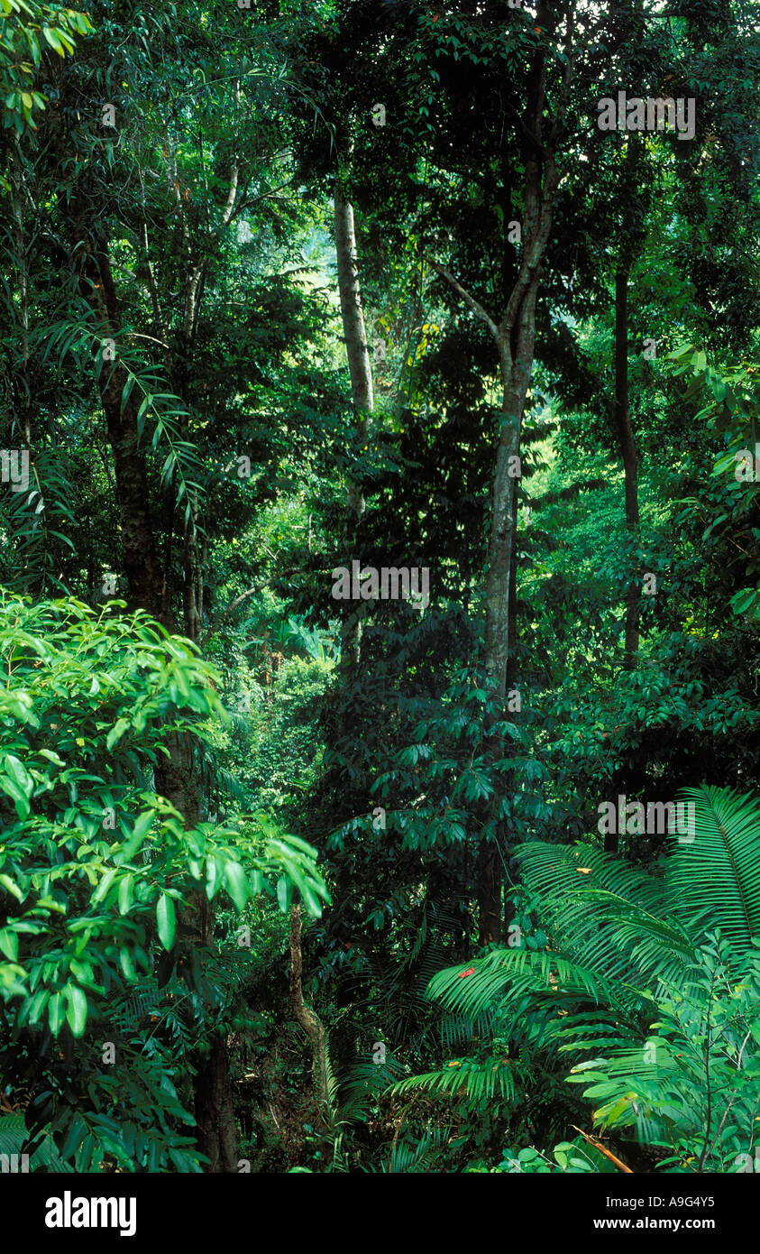 primary rainforest Langkawi Malaysia Stock Photo