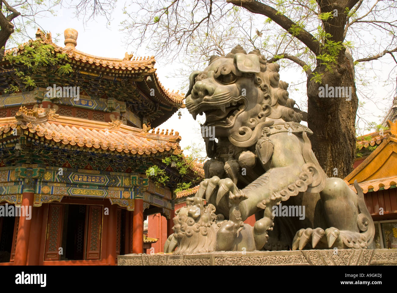 Imperial lion with cub guarding entrance to the Lama Temple (Yonghe Gong) Beijing - Stock Image
