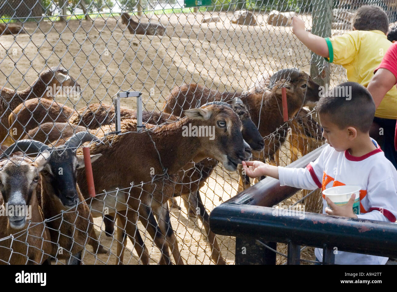 A young boy feeding goats at the Zoo Stock Photo