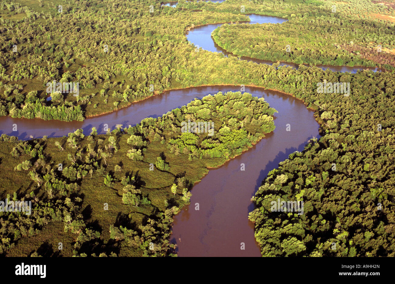 Aerial view of mangrove swamps , Madagascar - Stock Image