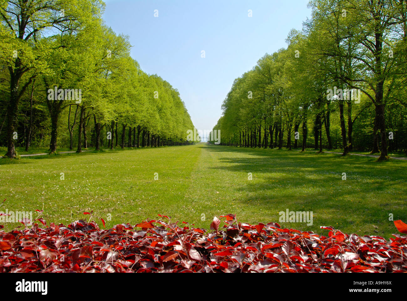 Park with lawn in forest aisle at Schloss Herrenchiemsee Herreninsel Chiemsee Bavaria Germany Stock Photo
