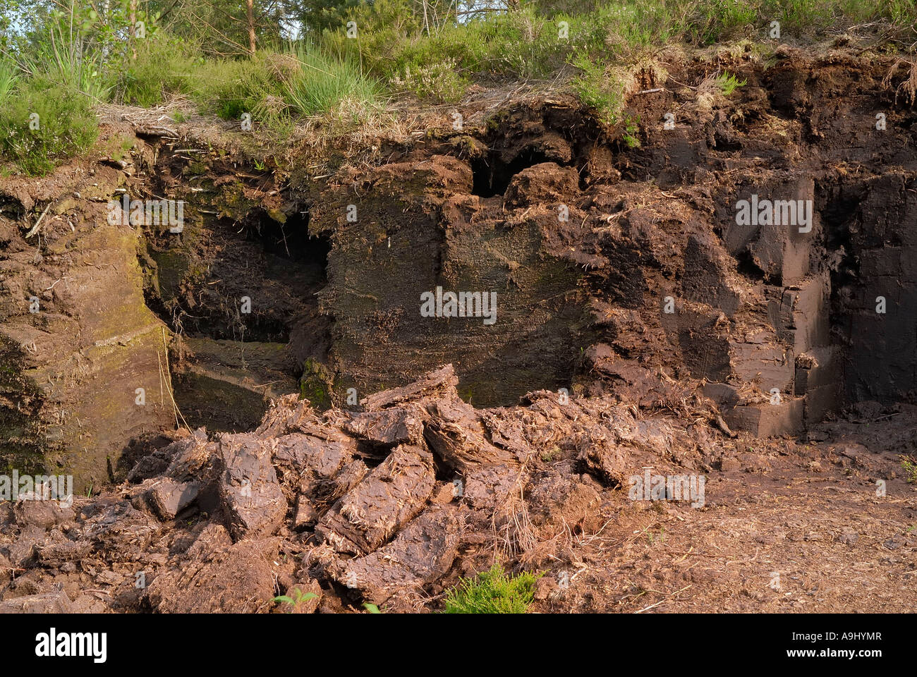 Peat mining claim with recently activity and dried peat turfs in peatbog south of Rosenheim, Germany - Stock Image
