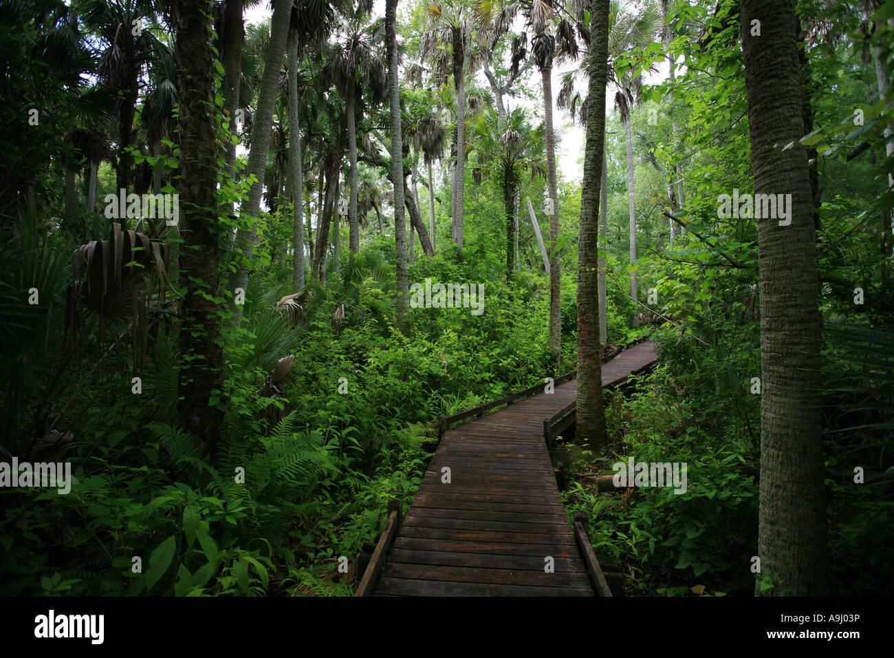 Last Subtropical Rainforest In Florida Alexander Springs
