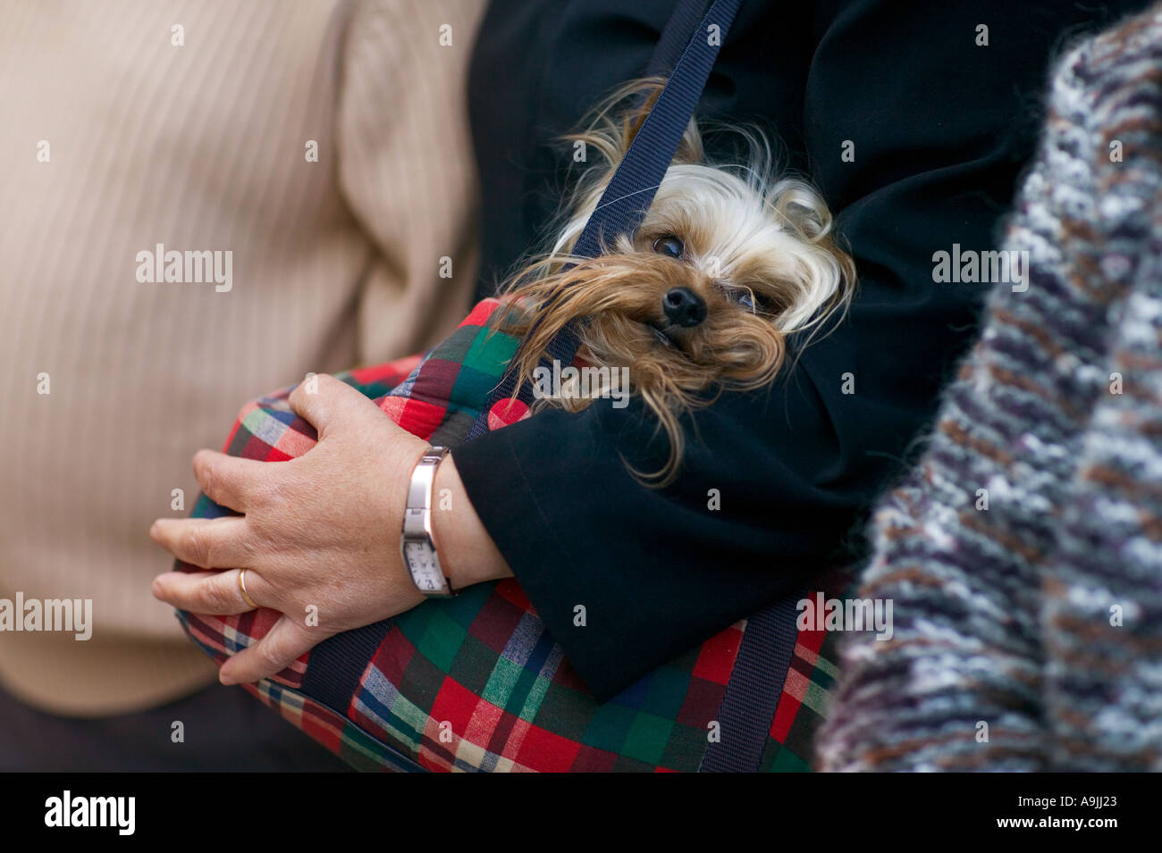 small dog - Stock Image