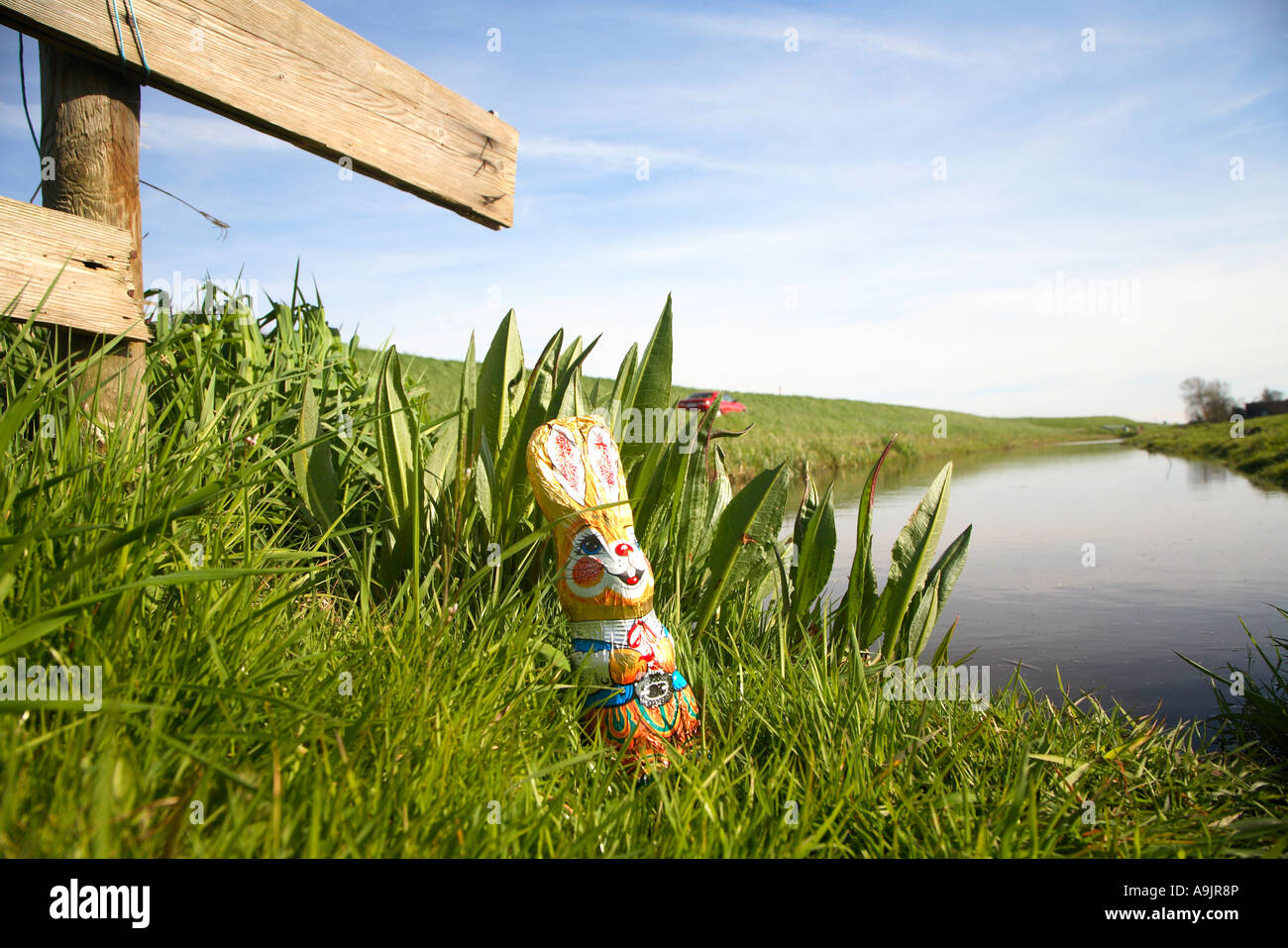 easter bunny in the green landscape of noord holland the netherlands