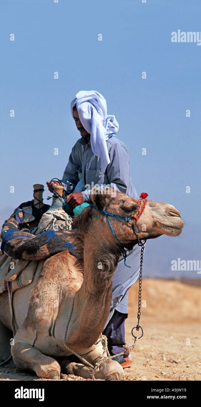 Local Bedouin man with his camel Nuweiba Red Sea Sinai Egypt Middle East - Stock Image