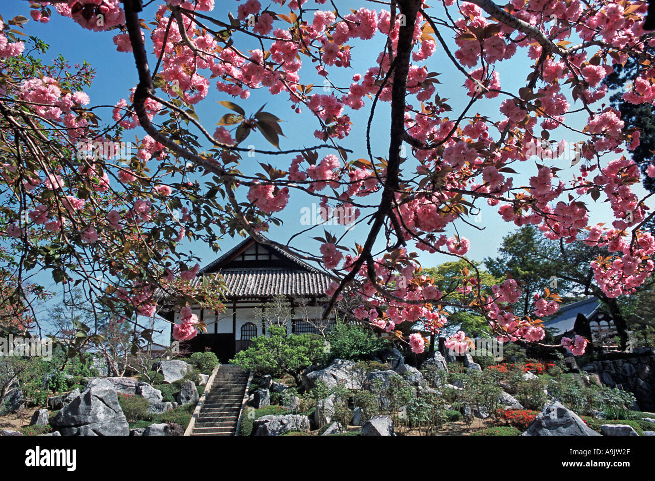 Cherry blossom in the gardens of Taima temple Nara prefecture Japan - Stock Image