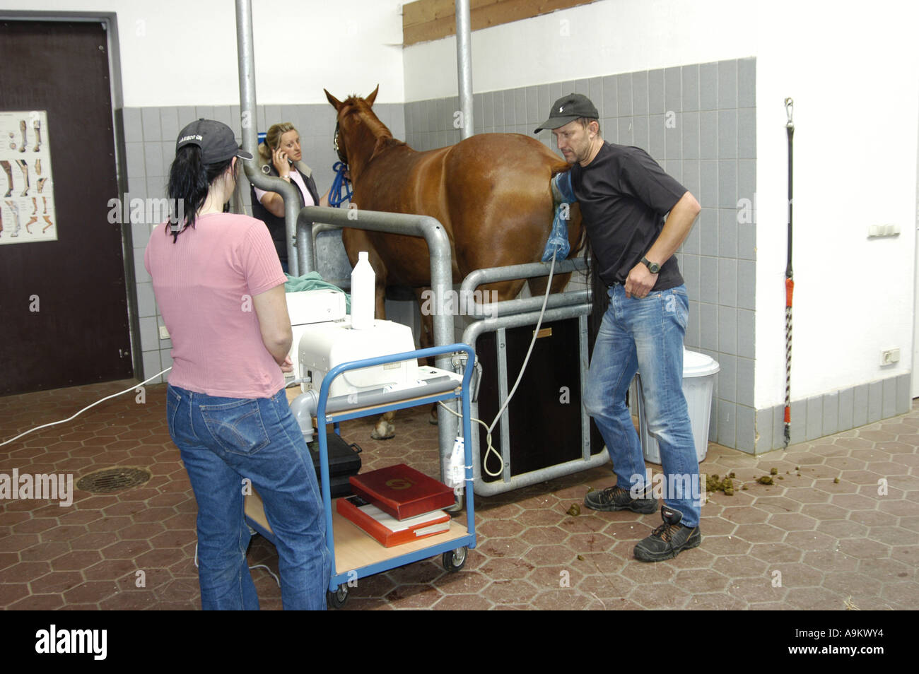 horse at the veterinarian - Stock Image