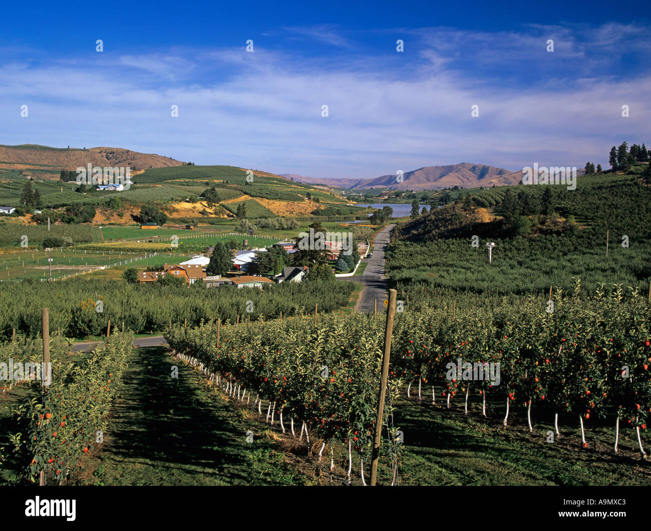 MANSON WASHINGTON STATE USA August Looking across the fruit orchards to Banjo Creek Farm Dry Lake Stock Photo