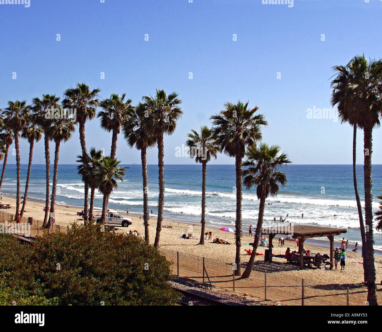 Palm trees on the beach in San Clemente Beach CA Stock Photo