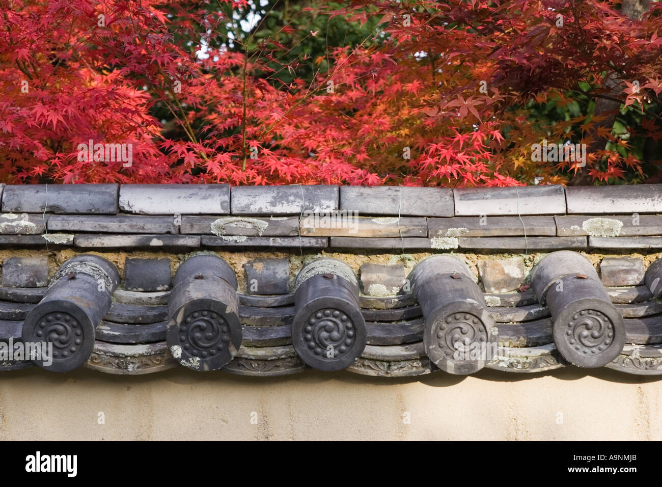 Japanese maple (Acer palmatum) during autumn and detail of wall and tile at Daitokuji Temple, Kyoto, Kansai Region, Japan - Stock Image