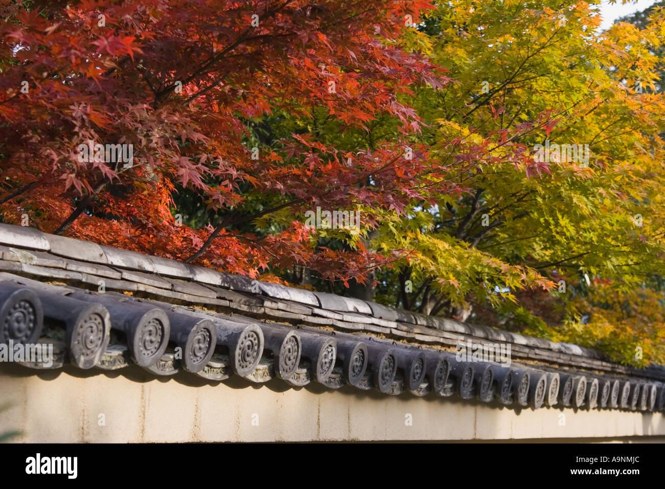 Japanese maple (Acer palmatum) during autumn and detail of wall at Daitokuji Temple, Kyoto, Kansai Region, Japan - Stock Image