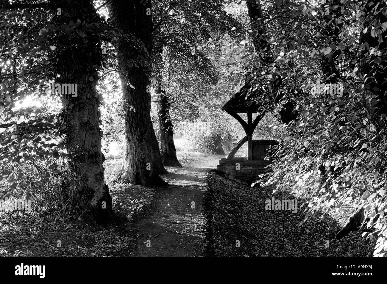 Black and white photograph of village path through lime trees with church litch gate - Stock Image