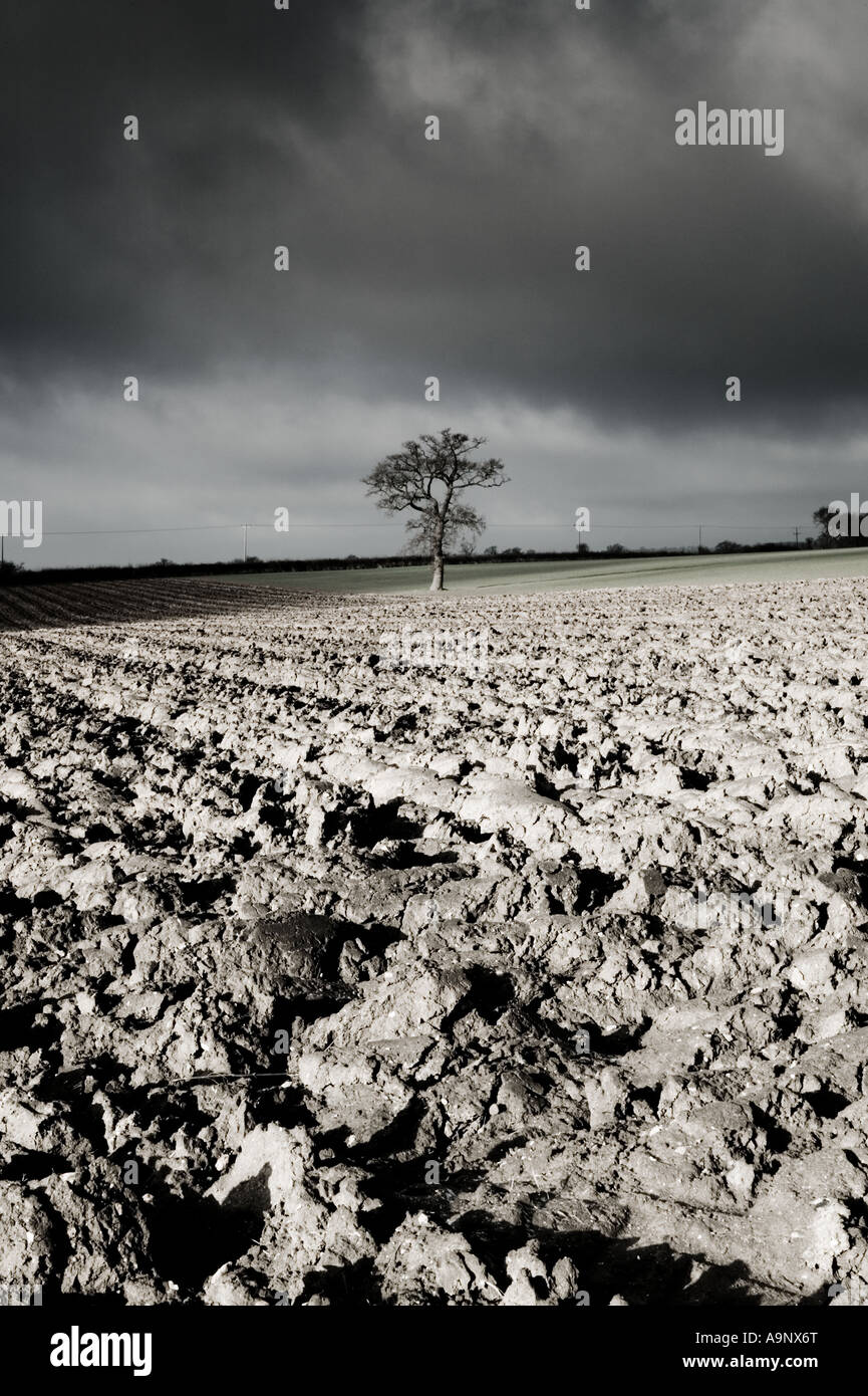 black and white tinted photograph of landscape of ploughed fields and a dramatic cloudy winter sky - Stock Image