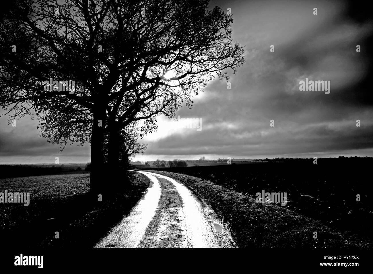 black and white image of oak tree at side of country lane against a dramatic winter cloudy sky - Stock Image