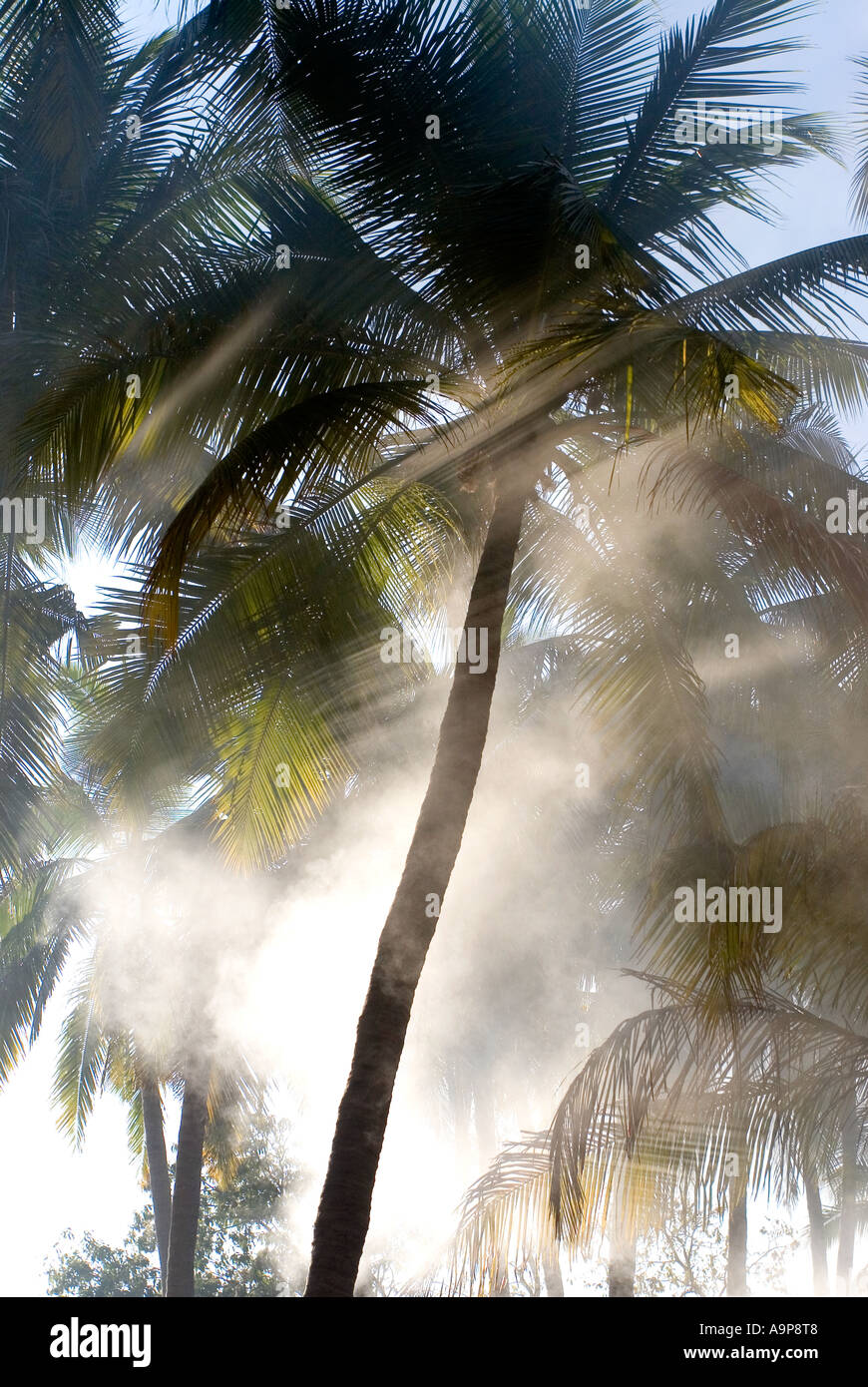 Morning shards of sunlight coming through palm trees in Southern India Stock Photo