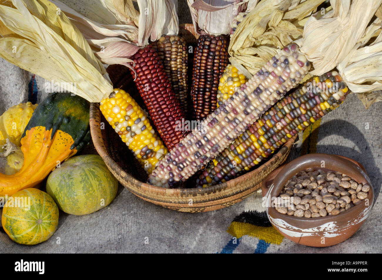 squash, maize, and beans, the three sisters of native american stock