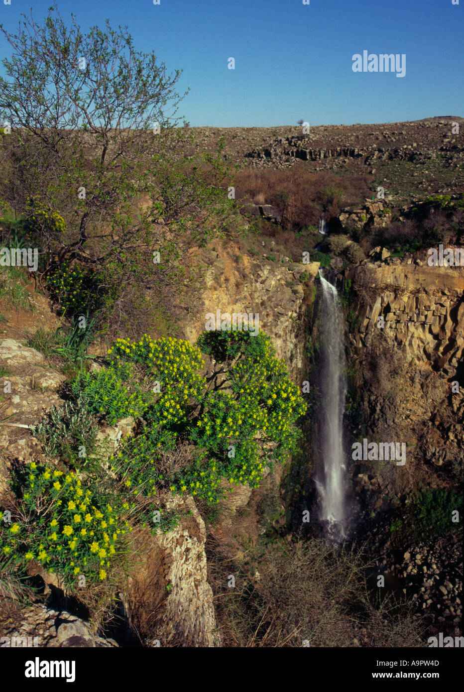 Israel Golan Heights Gamla nature reserve The waterfall view withflowers and tree in frgd Stock Photo