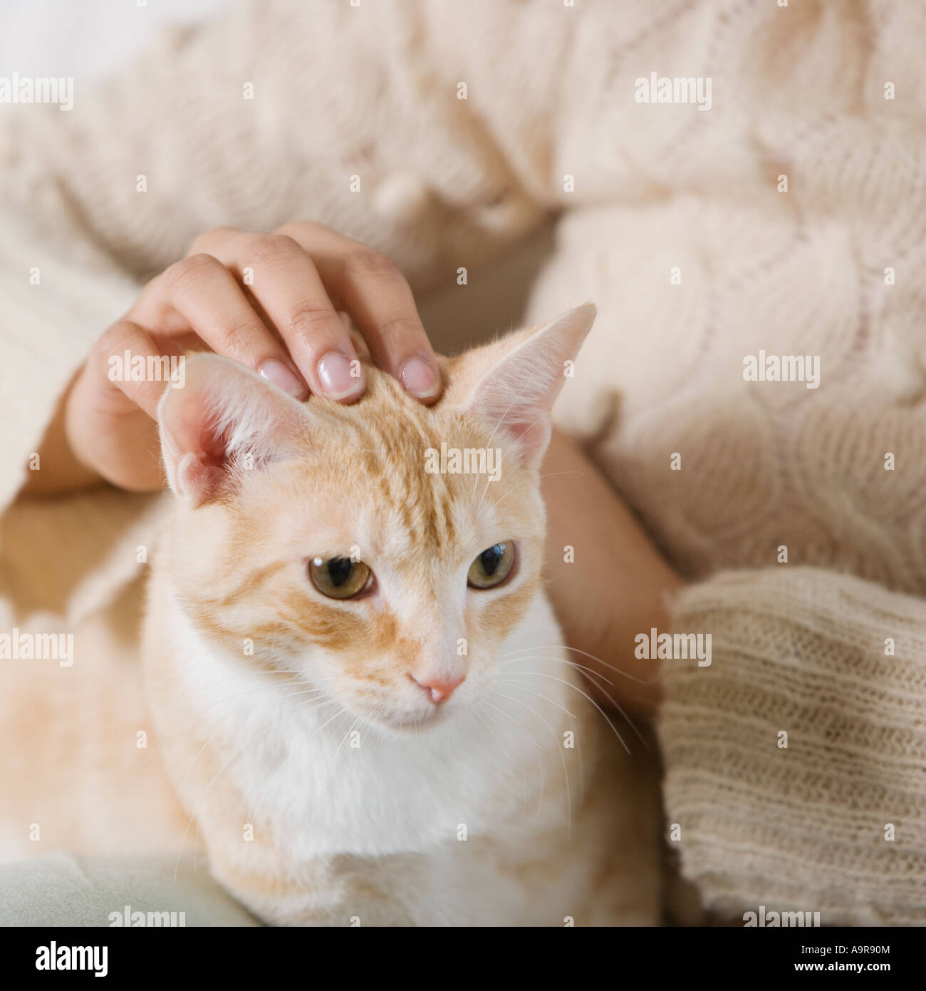 Indian woman petting cat - Stock Image