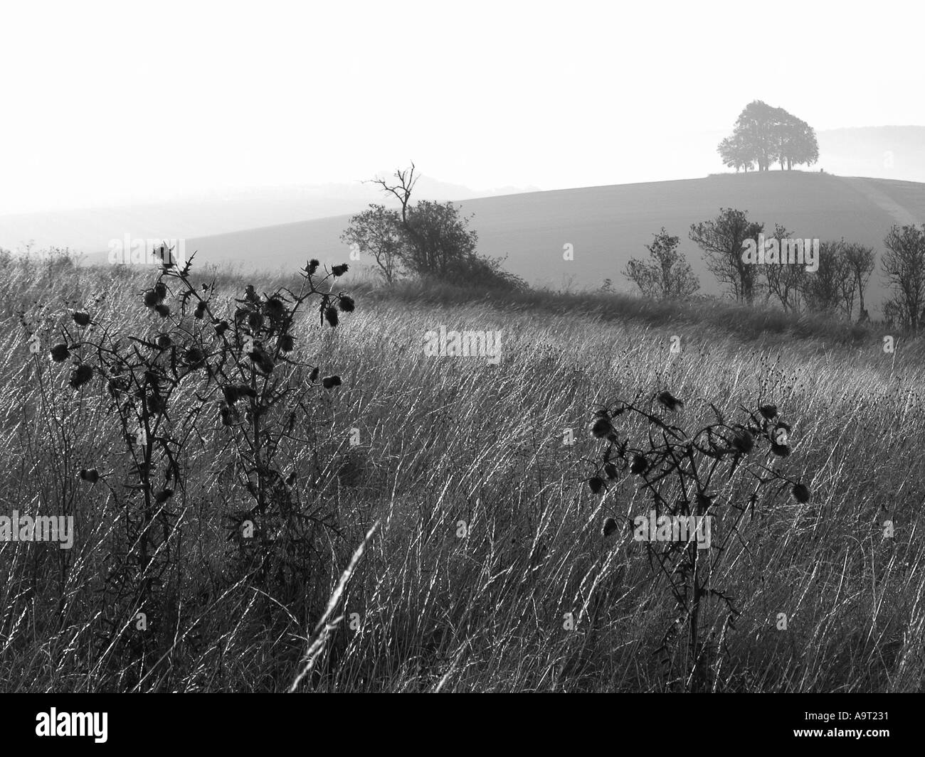 View from Wittenham Clumps Oxfordshire - Stock Image