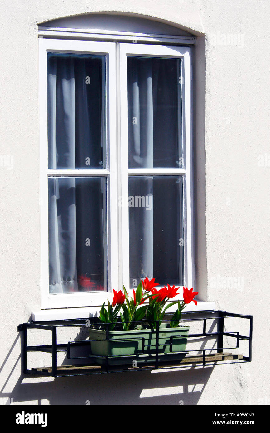 A Four Pane Window Frame With A Window Box Of Red Tulips Stock Photo