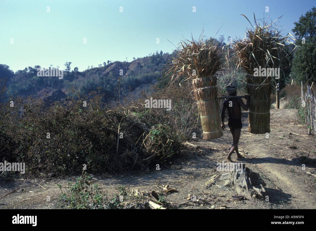 Murung tribal man carrying sheafs into village Bangladesh - Stock Image