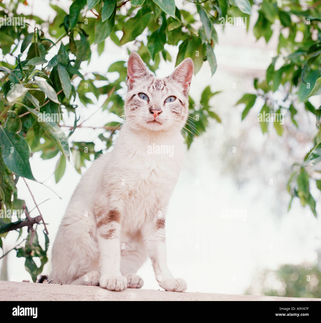 white tabby cat sat by trees - Stock Image