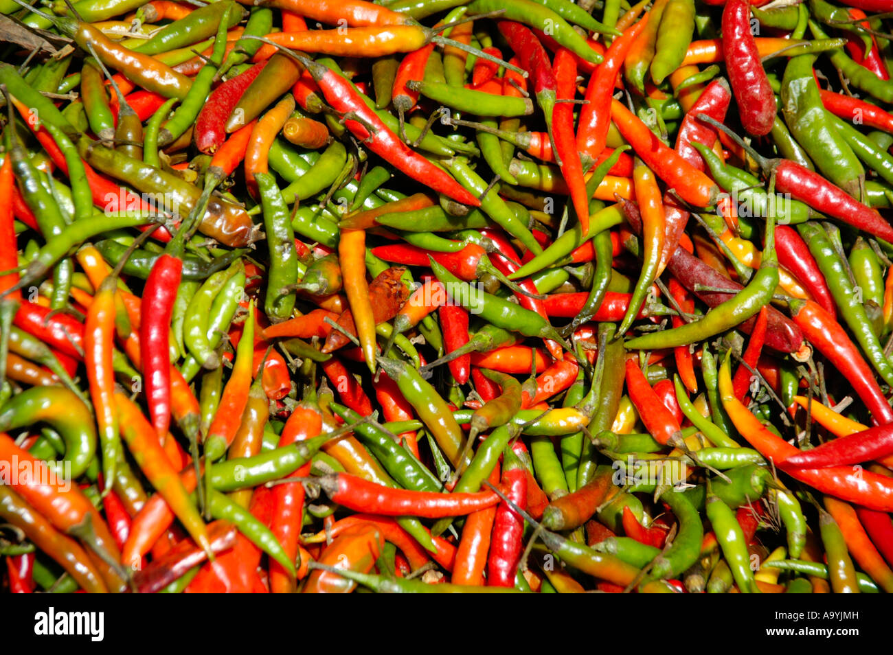 Red and green chili peppers on the market Boditti Ethiopia Stock Photo