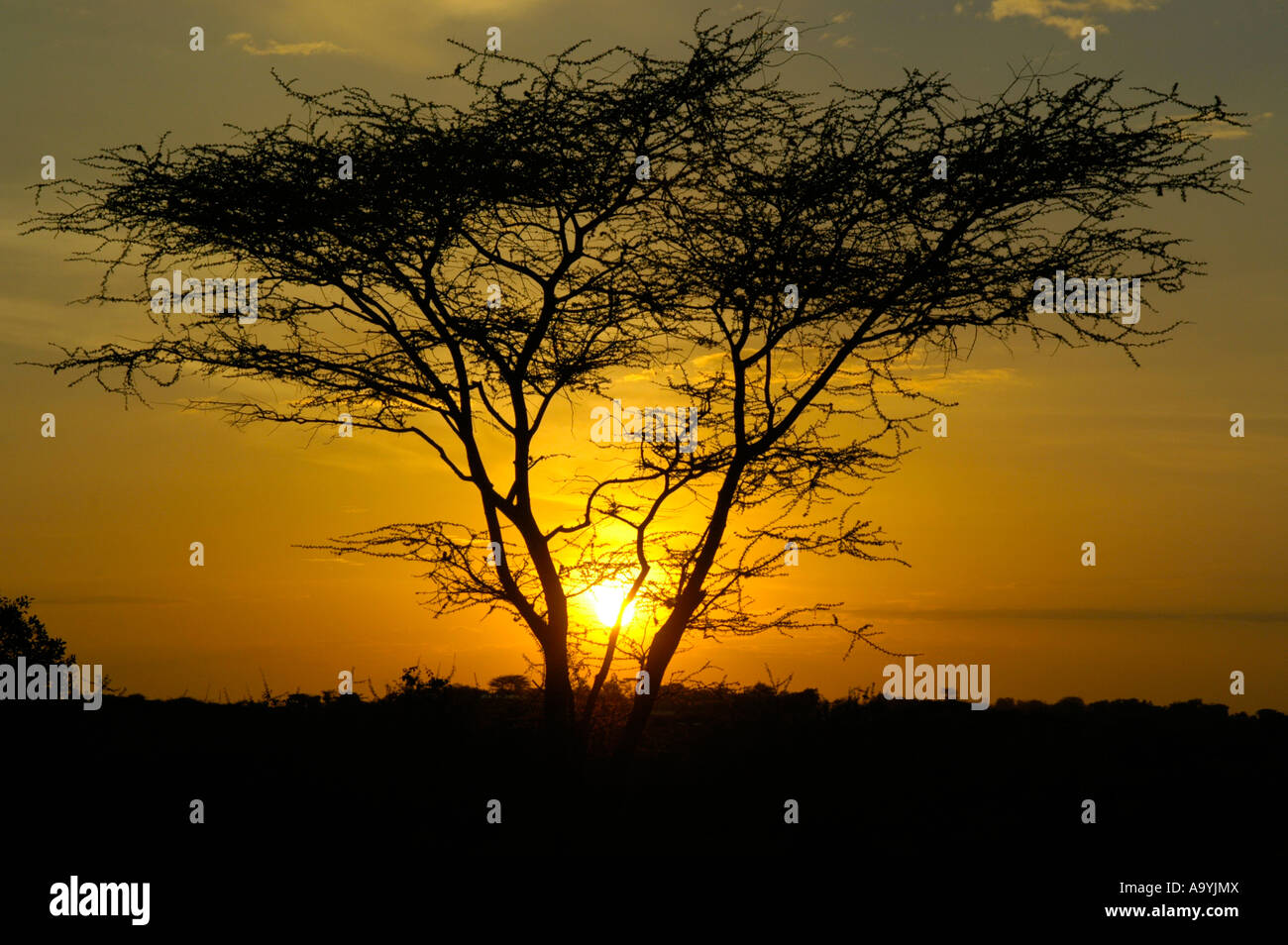 Orange sun and sky at sundown behind an acatia tree in the savannnah Turmi Ethiopia Stock Photo