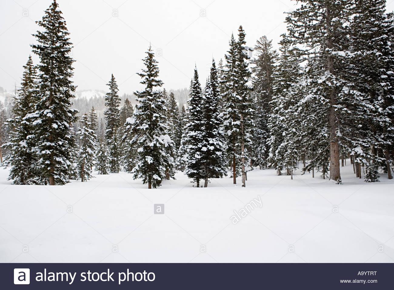 Winter scene - Stock Image