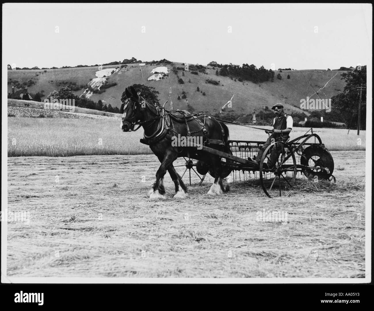 Horse Drawn Haymaking - Stock Image