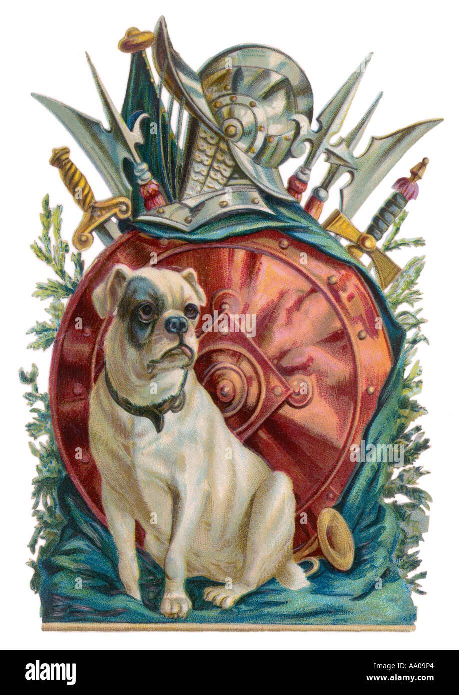 Belligerent Bulldog - Stock Image
