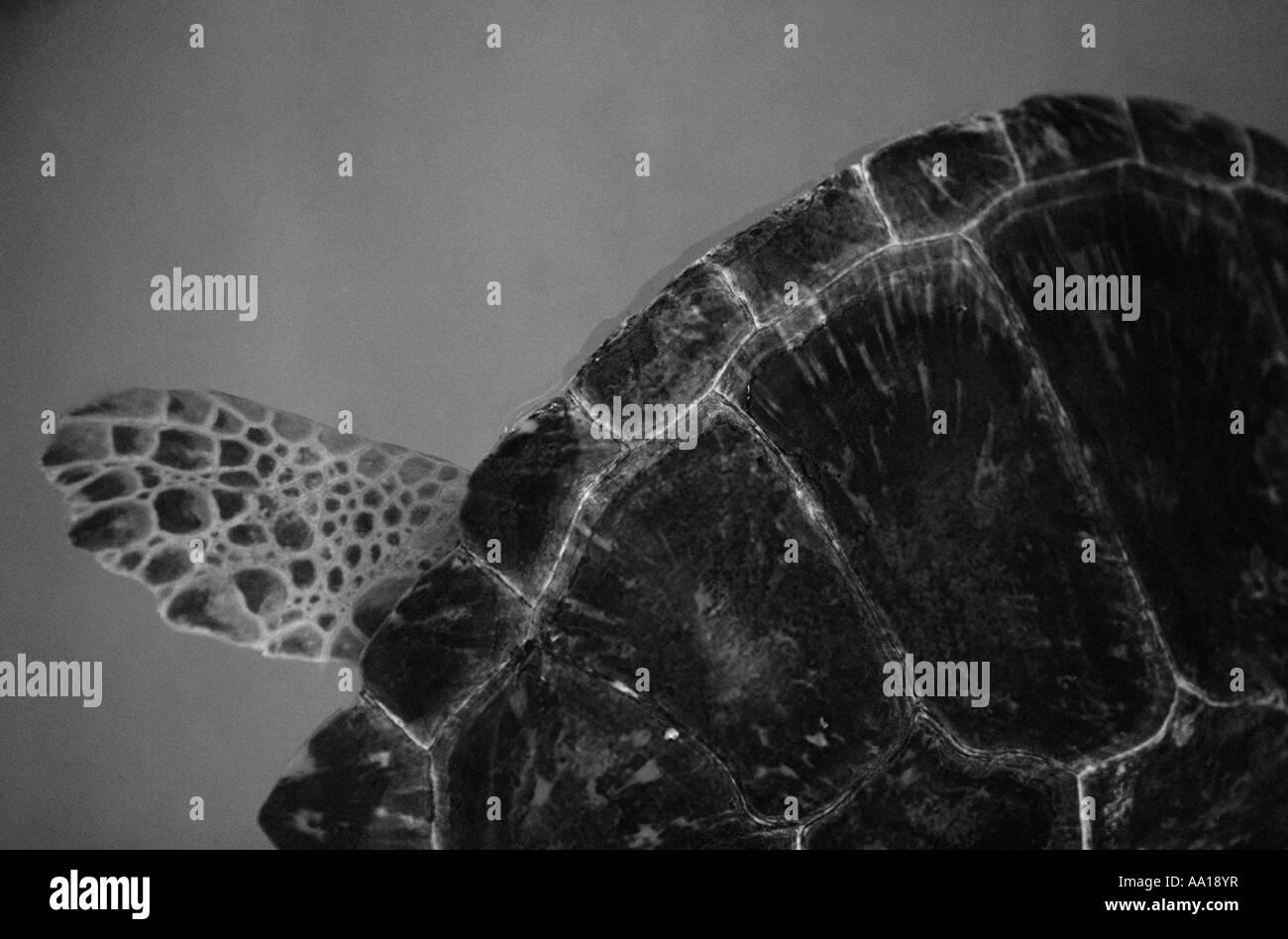 Anatomy Turtle Stock Photos Anatomy Turtle Stock Images Alamy