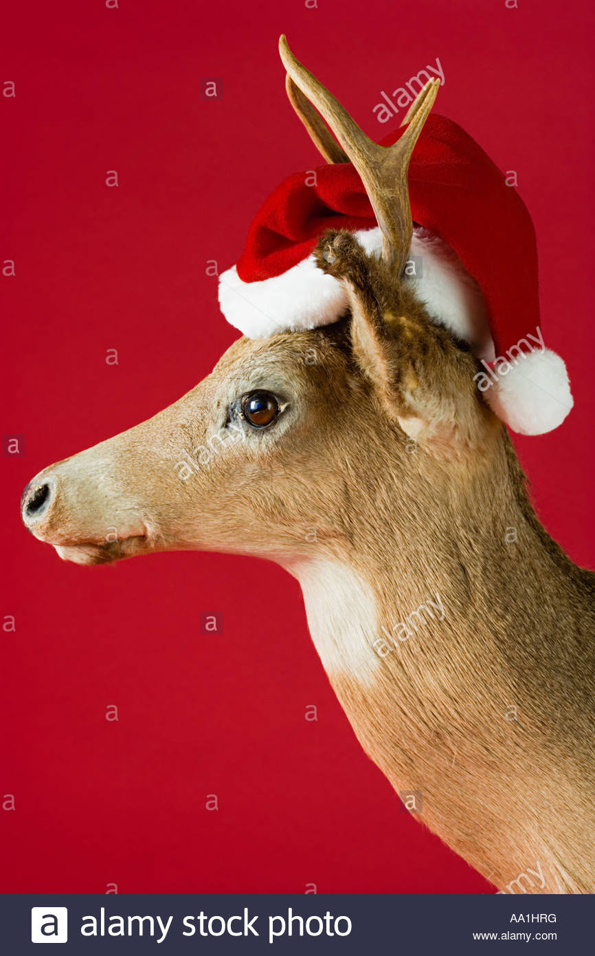efb055aadcc42 Santa And Reindeer Stock Photos   Santa And Reindeer Stock Images ...
