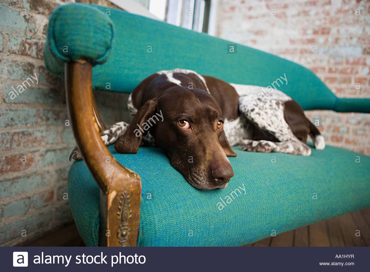 Pointer Dog House Stock Photos & Pointer Dog House Stock Images - Alamy