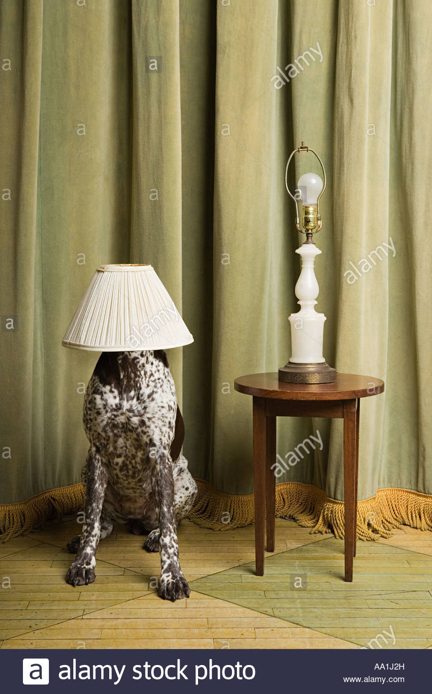 Dog with a lampshade on its head stock photo 12484216 alamy dog with a lampshade on its head aloadofball Gallery