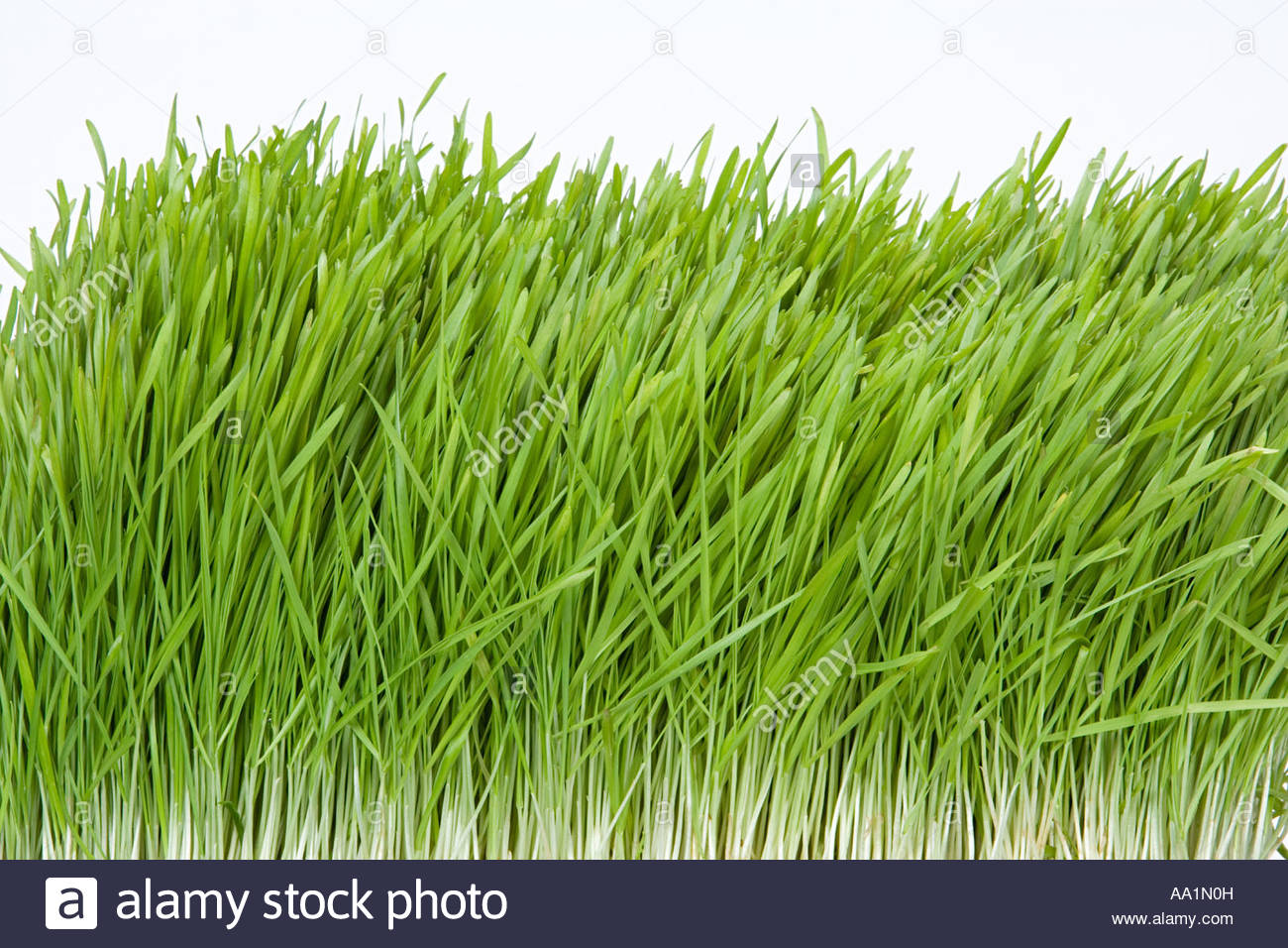 Grass - Stock Image