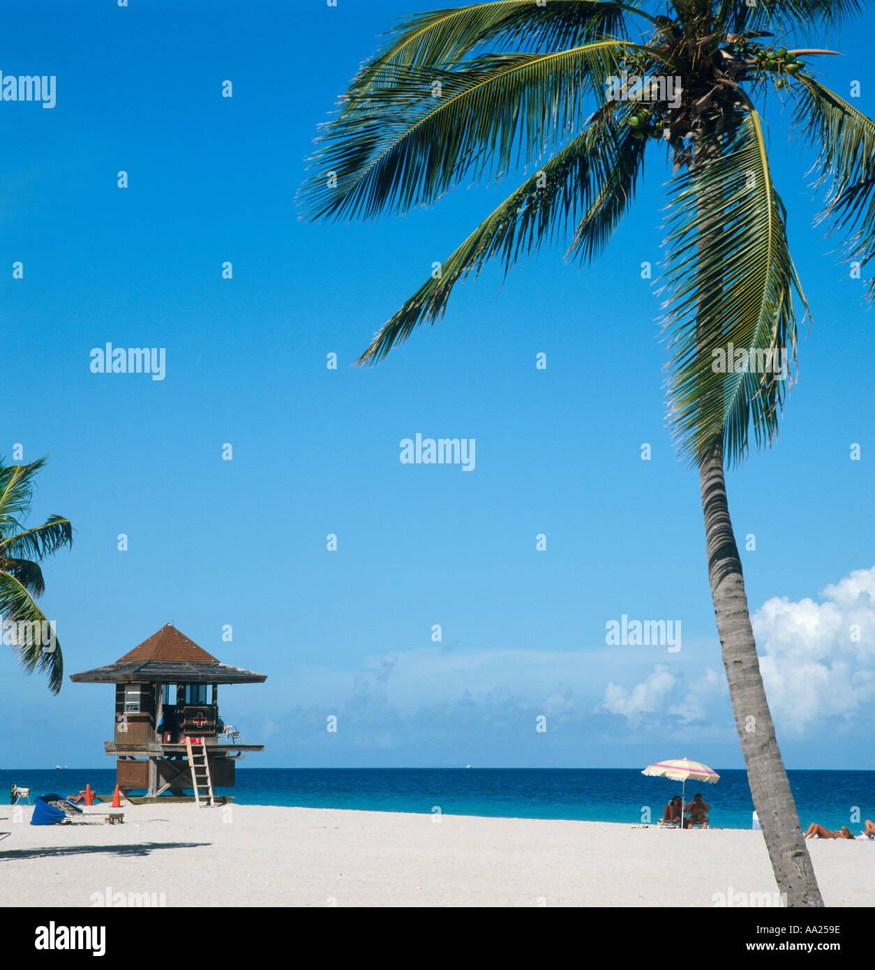 be5bf40ad88 Hollywood Beach Florida Palm Tree Stock Photos   Hollywood Beach ...