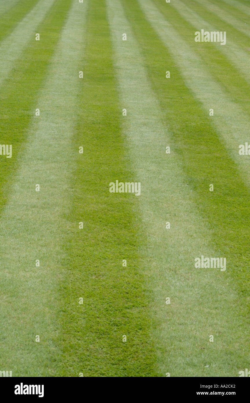 immaculate lawn - Stock Image