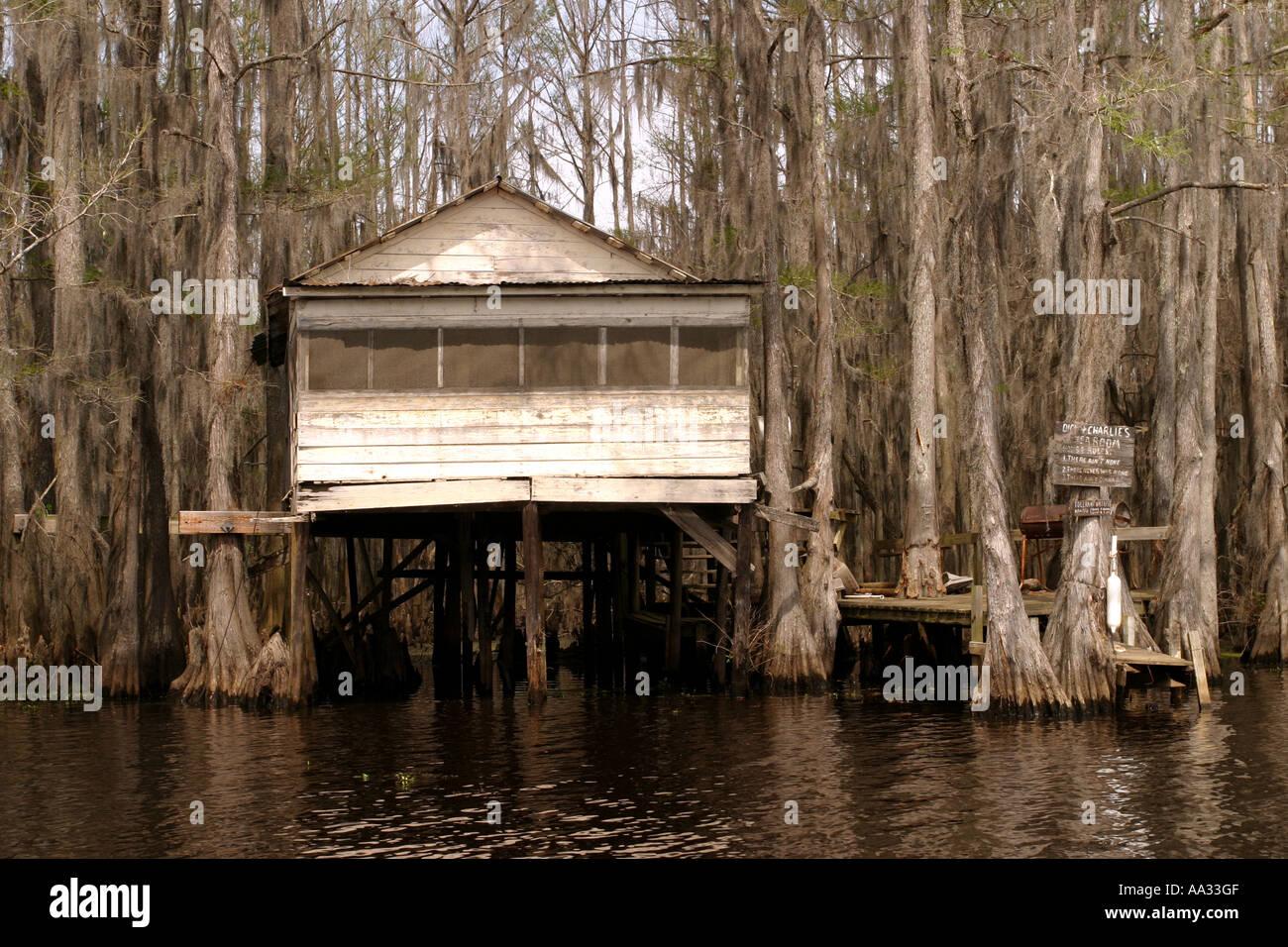Cypresses trees and spanish moss. Swamp land, Caddo Lake, Texas, USA Stock Photo