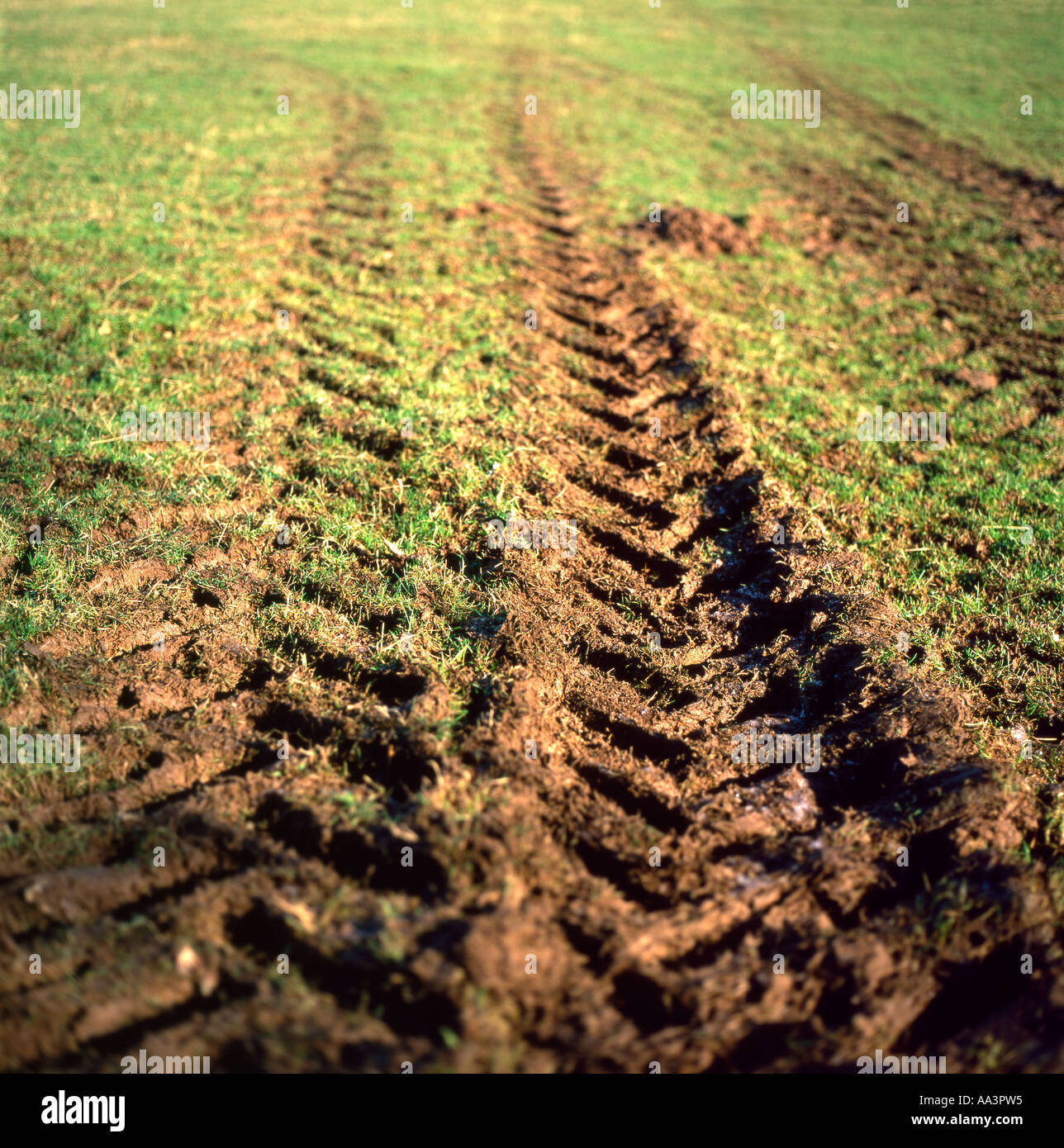 Low angle view of tyre tracks marks on a green grass field on a farm in rural Wales UK  KATHY DEWITT - Stock Image