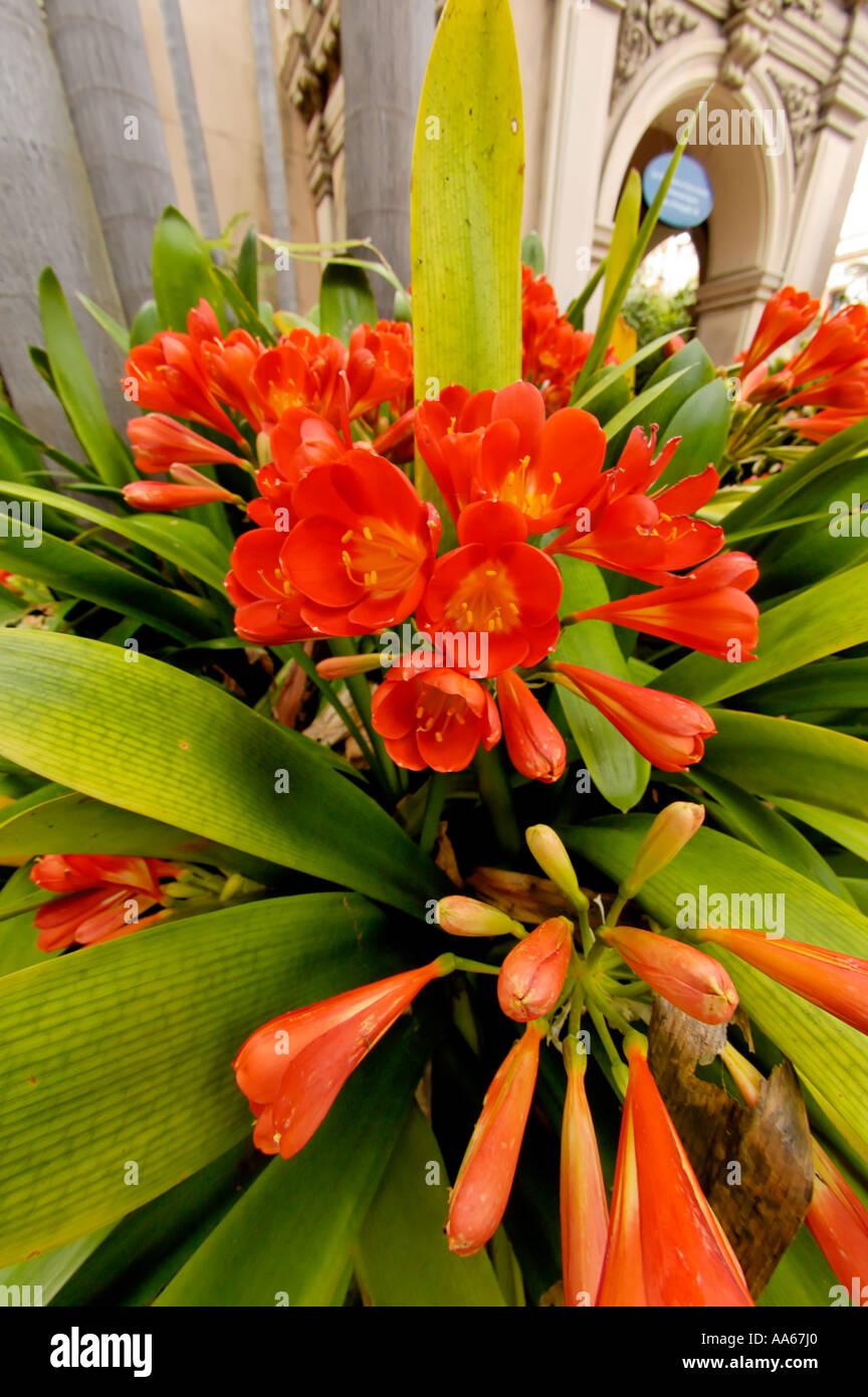 Fisheye lens view of flowers near the Zoro Garden in Balboa Park San Diego California USA - Stock Image